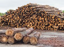 A huge pile of logs from the forest, a sawmill, timber for export, beam royalty free stock image
