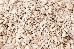 Huge pile of white sunflower seeds royalty free stock photos