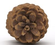 Huge Pine Cone. The top of a huge pine cone creates a graphic geometric pattern Royalty Free Stock Photos