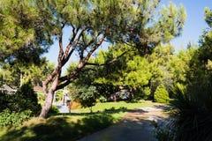 Huge pine tree near the walkway Stock Photography