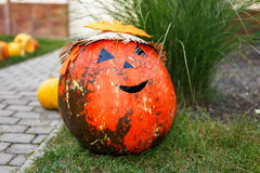 Huge pumpkin in the grass Royalty Free Stock Photo