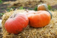 Huge pumpkin in hay Royalty Free Stock Images