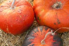 Huge pumpkin in hay Stock Photo