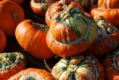 Huge pumpkins Stock Images