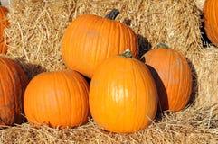 Huge pumpkins Royalty Free Stock Image