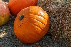 Big ripe pumpkins Stock Photos