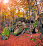 Huge rock in the autumn forest. Stock Photos