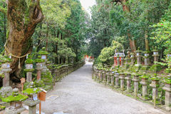 Huge sacred camphor tree and stone lanterns leading to Kasuga Sh Royalty Free Stock Images