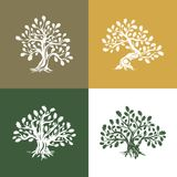 Huge and sacred oak tree silhouette logo  on background Royalty Free Stock Photography