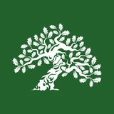 Huge and sacred oak tree silhouette logo badge isolated on green background Royalty Free Stock Photography