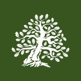 Huge and sacred oak tree silhouette logo badge isolated on green background Stock Photos