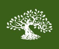 Huge and sacred oak tree silhouette logo badge isolated on green background. Stock Photos