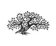 Huge and sacred oak tree silhouette logo badge isolated on white background. Stock Photo