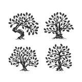 Huge and sacred oak tree silhouette logo isolated on white background. Royalty Free Stock Photo