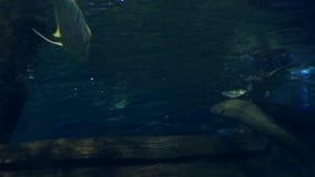 Huge saltwater aquarium with its life stock video