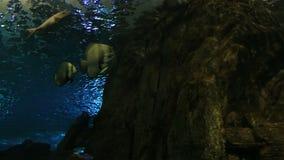 Huge saltwater aquarium with its life stock video footage