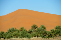 Huge sand dune behind the palm trees Royalty Free Stock Photo