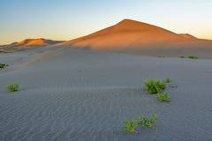 Huge sand dune at sunrise Royalty Free Stock Photography
