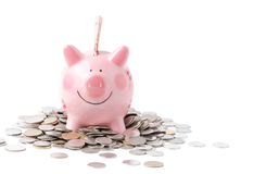 Huge savings in the pink piggy bank isolated on white. Background, overflowing with cash Royalty Free Stock Photos