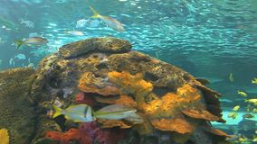 Huge schools of tropical fish swimming in a colorful coral reef stock video footage