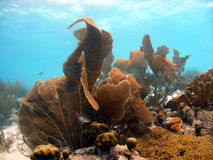 Huge Sea Fan Stock Images