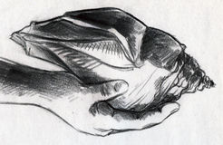 Huge sea shell in hand. Hand drawn pencil sketch of sea shell which is bigger than human hand Stock Photography