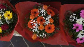 Huge selection of multicolored gerbera bouquets presented at trade fair, market. Stock footage stock video footage