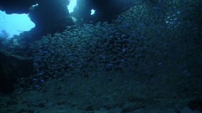 Huge Shoal Fish on Coral Reef stock footage