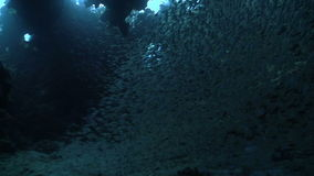 Huge Shoal Fish on Coral Reef stock video