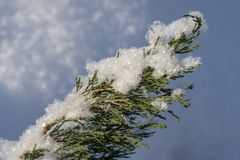 Huge snowdrifts, which sticks out from under the sprig of juniper stock photo
