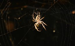 Huge spider background Royalty Free Stock Photography