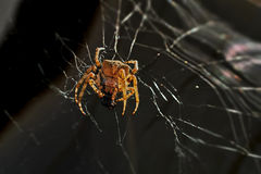 Huge spider Royalty Free Stock Photography