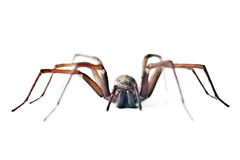 Huge spider Stock Photo