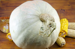 Huge squash and dried corn on a table Royalty Free Stock Image