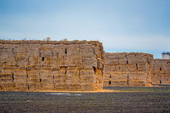 Huge stack of straw Royalty Free Stock Image