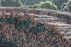 Huge stack of tree trunks in a lumber yard. Stock Image