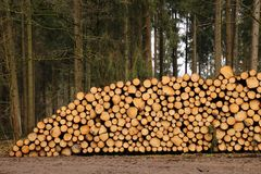 Staple of wood. A huge staple of Wood stored near a dirt road in a forest Stock Images