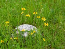 Huge stone boulder in green grass Stock Photo