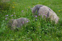 Huge stones boulders in green grass Stock Photo