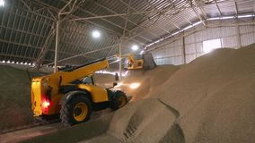 Huge storage facility of agricultural crops. Telescopic handler with ladle working at covered bulk stock. Telehandler