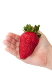 Huge strawberry in child's hand Royalty Free Stock Images