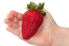 Huge strawberry in child's hand Royalty Free Stock Photography