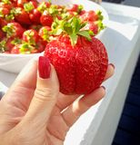 Strawberry crave royalty free stock photo