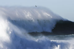 Huge surf at Cape Banks, Sydney, Australia. Stock Photos