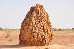 Huge Termite Cathedral in the desert stock photo