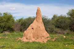 Huge termite mound in Africa Stock Image