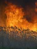 Huge and terrible fire in the field royalty free stock photos