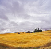 Huge thundercloud field after harvesting. Stock Photos