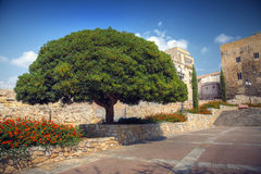 Huge tree Stock Images