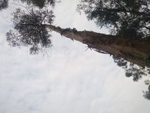 Huge tree with a beautiful cloudy sky royalty free stock images